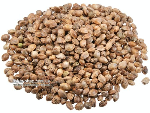 Семена конопли купить украина купит семена марихуаны россия